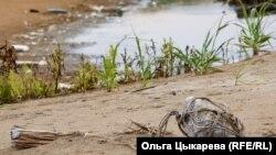 Пластиковый поплавок, используемый браконьерами из Северной Кореи