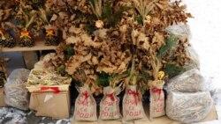 Петербург Свободы.Загадки и тайны рождественской елки