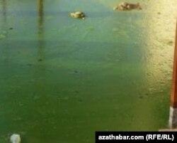 Застоявшаяся дождевая вода, скопившаяся на улицах Туркменабада покрылась тиной