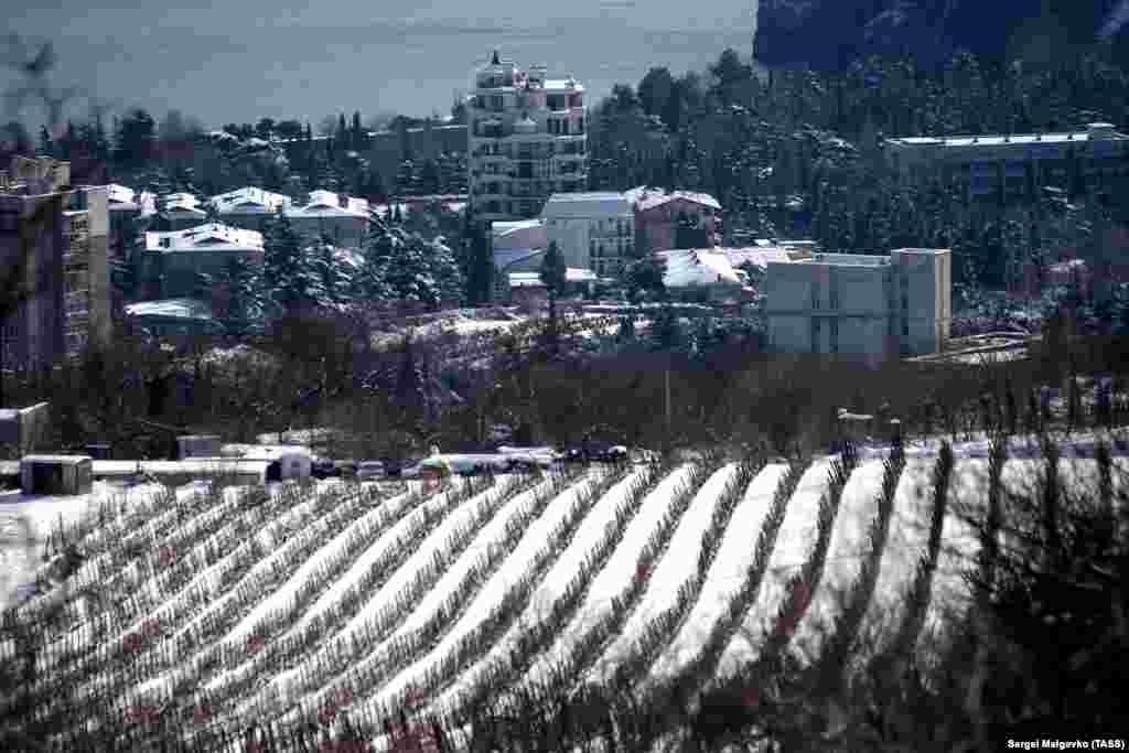 Вид на заснеженные виноградники в Партените
