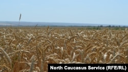 В Ставропольском крае зарегистрированы 19,3 тыс. крестьянских хозяйств