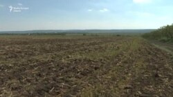 Agricultura Moldovei, între secetă, îngheț de primăvară și Covid-19