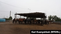Лошади под навесом на ферме в селе Саржал.