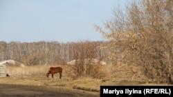 Деревня имени 18-го Партсъезда