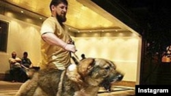 """An ally who is speaker of Chechnya's parliament posted a photo of Ramzan Kadyrov with an angry dog straining on its leash and said its """"fangs are itching"""" to get at opposition figures."""
