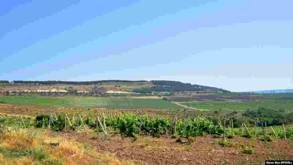 Ушаковку окружают виноградники агрофирмы «Золотая Балка»