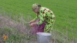 Узбекистан уже празднует Наурыз