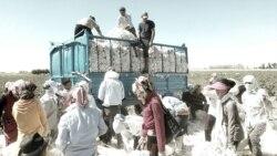 OzodSuhbat: Одамларни пахтага чиқариш учун кундузи газни узиб қўйишаяпти