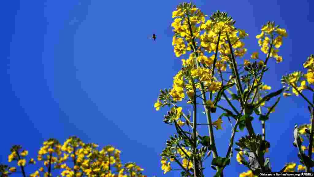 Çeçeklerni cıyıp alğan soñ, pıtaqlarınen ev ayvanlarını aşatalar