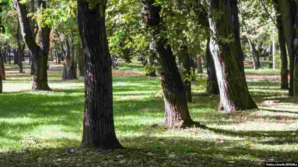 Тіні в парку