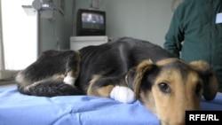 В Тбилиси есть всего пара приютов для собак, и этого явно не достаточно