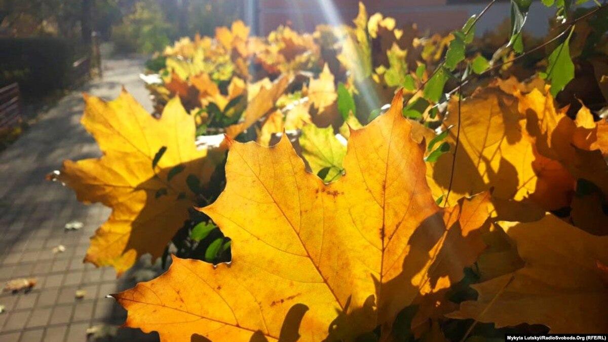 Деньги из осенних листьев. Необычный экологический проект задумали на Донбассе