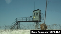 Тюремная сторожевая вышка, колючая проволока и ствол спиленного дерева. Поселок Заречный Алматинской области, 10 августа 2014 года.