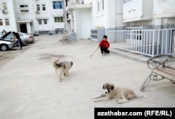 Stray dogs in Ashgabat are being brutally culled yet again.