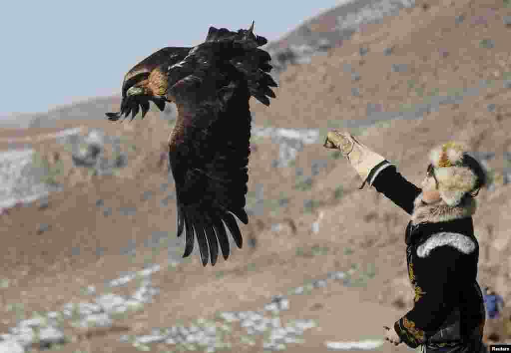 Охота с ловчими птицами — древняя традиция казахов, а также кыргызов, монголов и некоторых других народов.Беркут для казахов - своего рода национальный символ. Изображение птицы есть на флаге Казахстана.