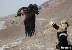 Беркутчи выпускает свою птицу на охоту. Фото сделано на соревнованиях охотников-беркутчи близ села Нура Алматинской области. 13 февраля 2016 года.