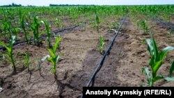 Крапельне зрошення у фермерському господарстві Первомайського району