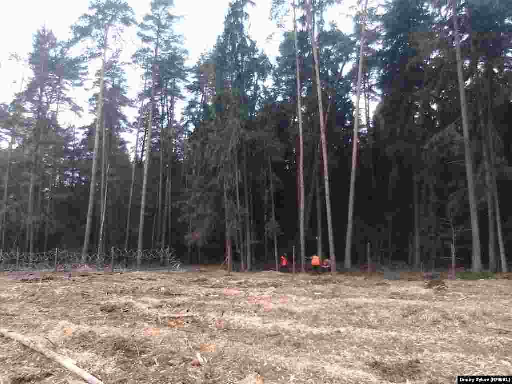 Лес в Жуковском обносят колючей проволокой