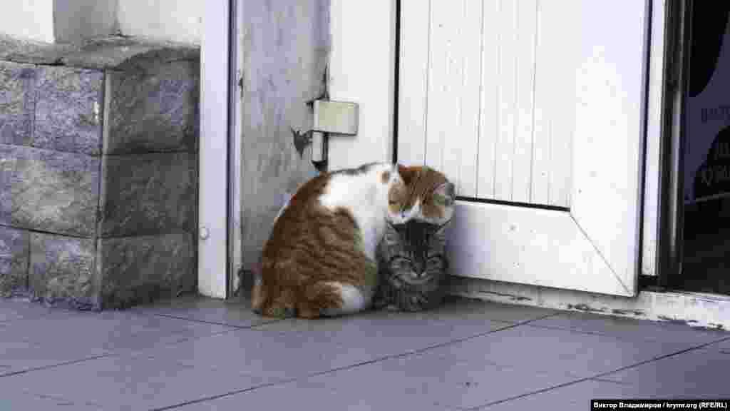 Коти на набережній в Балаклаві