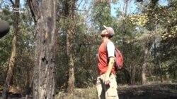 Хто і для чого підпалює Національний заповідник «Хортиця»? (відео)