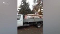 В Андижане жители предотвратили массовую вырубку чинар
