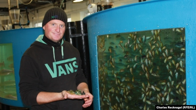 Research biologist Martin Steiness studies lumpfish, a useful creature that eats sea lice off of captive salmon.
