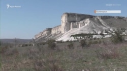На самоізоляції з хижаком: родина з Білогірська прихистила вовченя (відео)