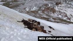 23-24-майда жааган кар Ысык-Көл облусунун аймагында 50 сантиметрге чейин жеткен.