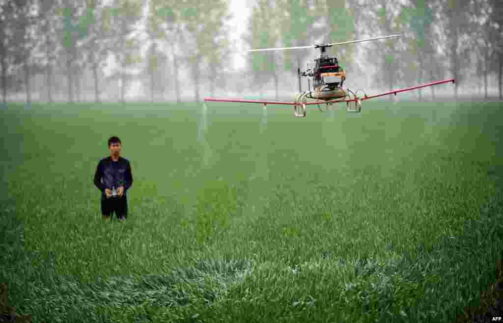 A man controls a drone spraying pesticides on a farm in Bozhou in China's central Anhui Province. (AFP)