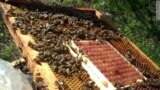 Немного солнца и немного мёда