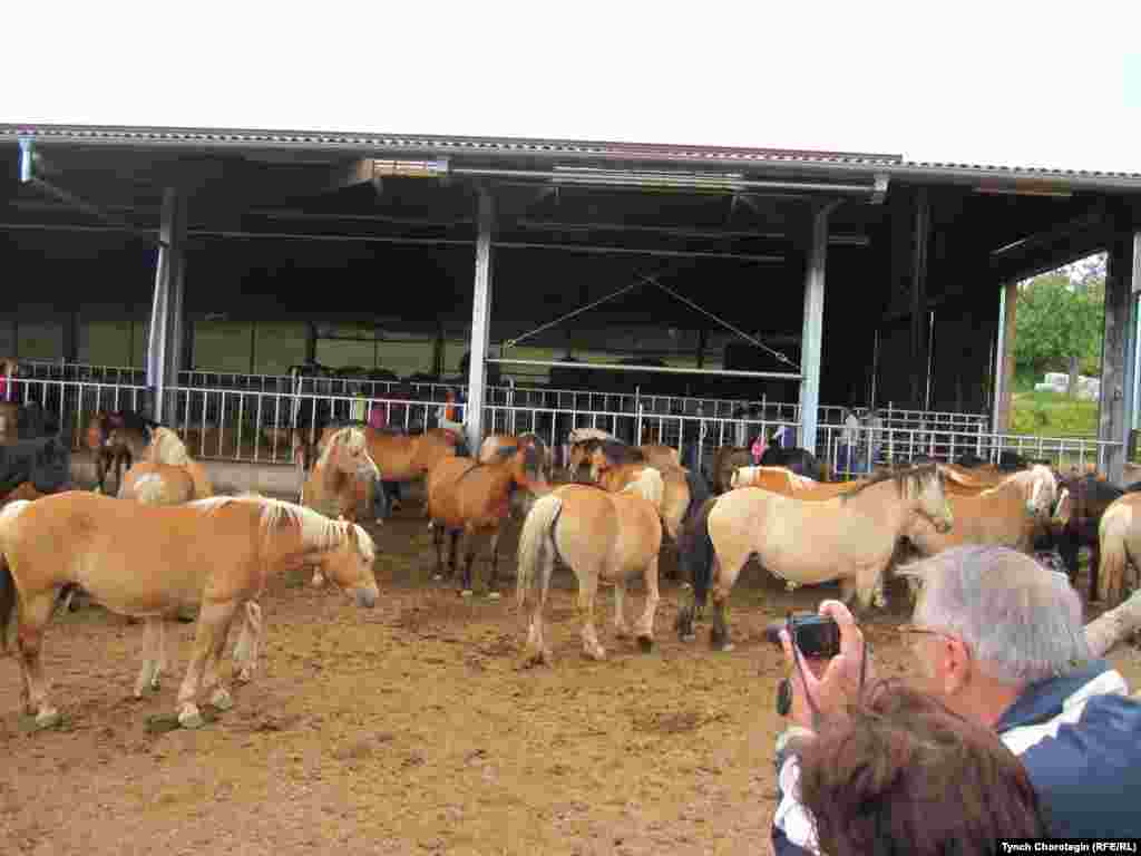 Гости фестиваля с радостью снимали на фото красивых коней.