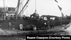 Переселенцы из Малороссии грузят домашний скот на корабль. Начало ХХ века