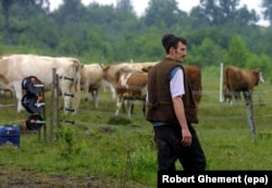 A Romanian shepherd inspects an electric fence that protects his sheep and cows from bears near the Piatra Craiului Mountains.