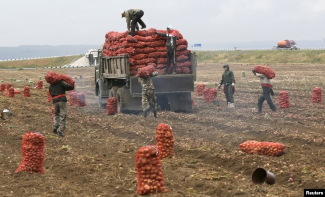 Hundreds of Turkmen students in southern Russia have reportedly taken to doing farm work in a bid to make ends meet. (illustrative photo)