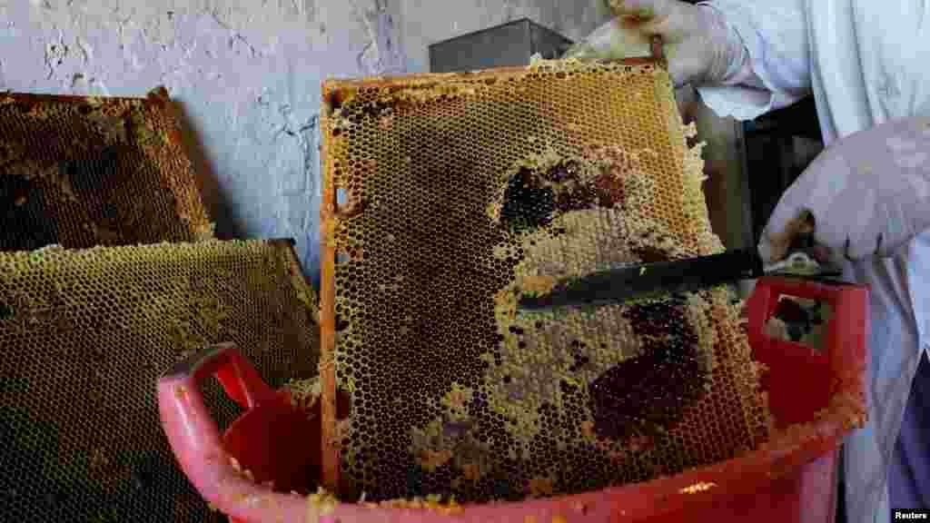 Следующий этап – распечатывание сот с уже созревшим медом