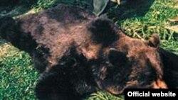 Бруно был первым диким медведем в Германии за последние 170 лет