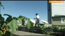 Торговый центр в Сан-Паулу обзавелся фермой на крыше