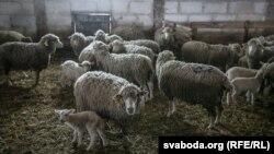 Илустрација-одгледувалиште на овци