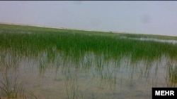 تالاب کمجان در ۱۲۰ کیلومتری شمال شرق شیراز واقع شده و نخستین تالاب بینالمللی ایران به شمار میرود.