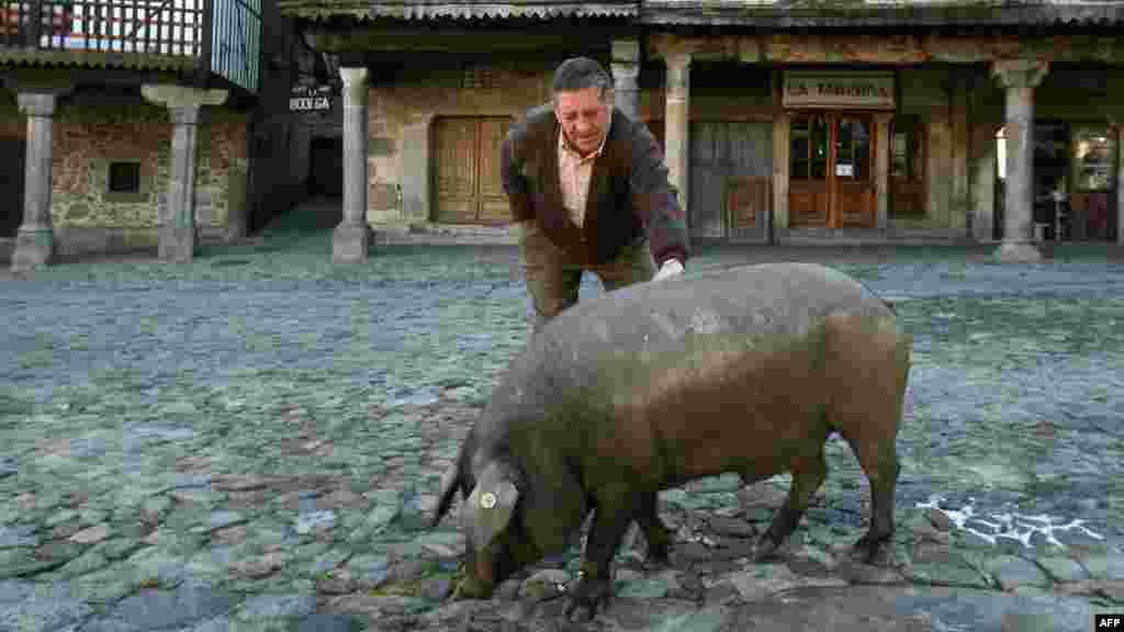 Эта свинья не достанется российскому потребителю - экспорт хамона из Испании запрещен российскими властями. В сентябре НВ узнали, что испанский хамон заменят уральским