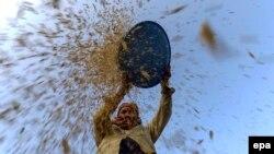 Zemlje pogođene najezdom gusenica osećaju sve veće posledice