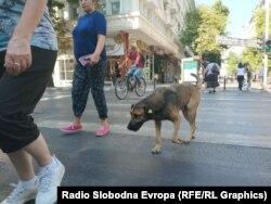 Кучиња скитници во центарот на Скопје