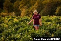 Миина Саак, бывший клерк из Эстонии, ныне чайный фермер на плантации рядом с Кутаиси