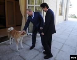Владимир Путин, Синдзо Абэ и путинская собака Юмэ редкой японской породы. Сочи, 8 февраля 2014 года