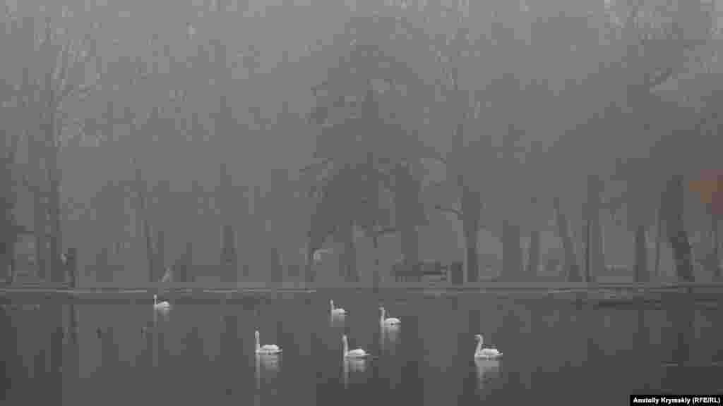 Лебеді на парковому ставку