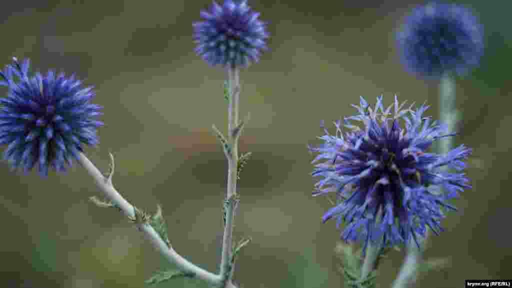 Дорожная пыль пока не покрыла цветы на горных склонах