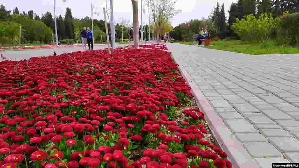 Маргаритки в парке имени Ахматовой