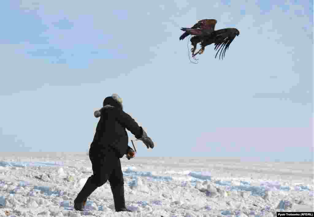 По словам организаторов, если бы соревнования удалось провести до 15 февраля, пока был открыт сезон охоты, можно было бы устроить охоту на лис, корсаков, шакалов и зайцев. На этот раз роль жертвы досталась кроликам, поймать которых крупным птицам не составляло особого труда.