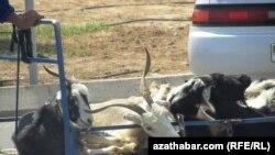 Скот на рынке. Иллюстративное фото.
