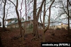 Каштан з тоўстым ствалом і магутнымі каранямі ў даліне Юрыздыкі (пасярэдзіне)